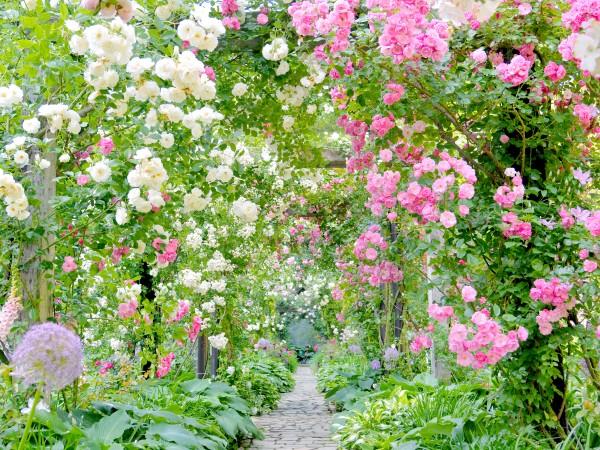 バラに囲まれて優雅な気分を味わってみては?